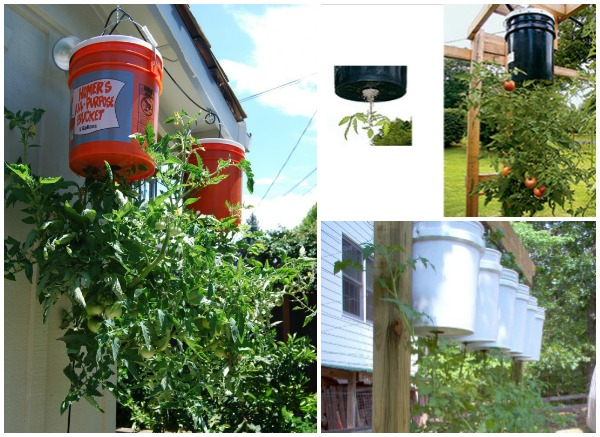How to Grow Tomatoes Upside Down- DIY Upside down tomaton planter