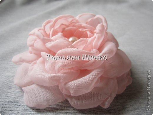 Chiffon-Rose01.jpg