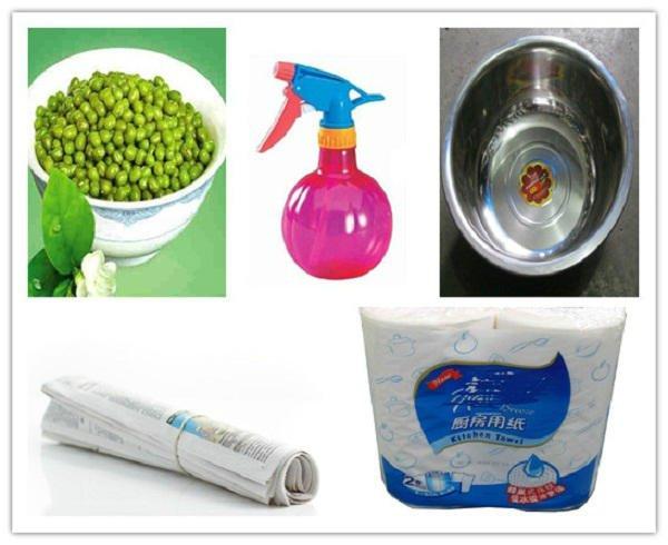 diy-green-bean-sprout03.jpg