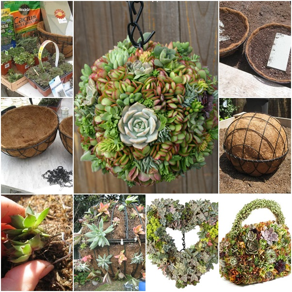 diy hanging succulent Ball tutorial
