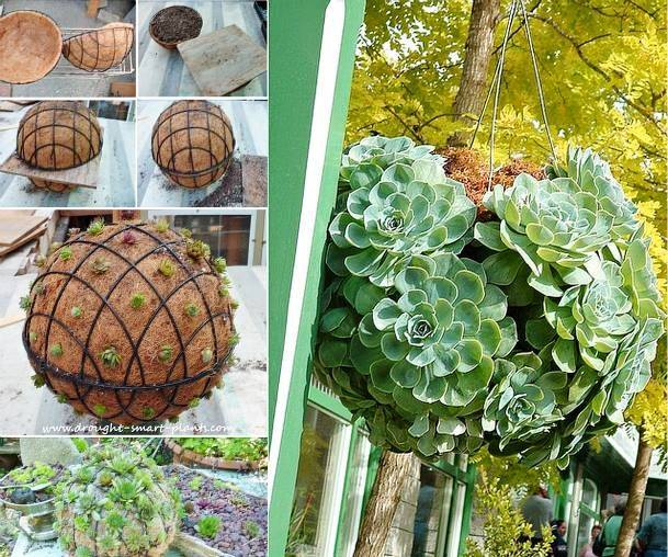 Wire 2 Garden Baskets Together And Create A Gorgeous Succulent Ball!