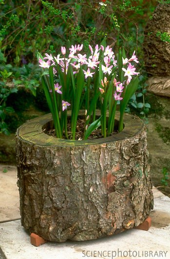 Diy hollowed tree wood planters for Hollow tree trunk ideas