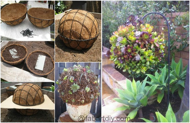 DIY Hanging Succulent Ball for your Garden step by step instructions