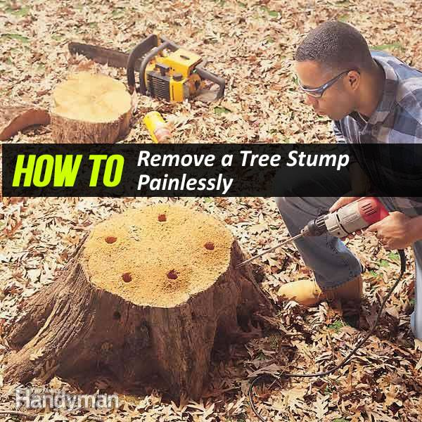 How To Remove A Tree Stump Yourself Painlessly Diy Tutorials