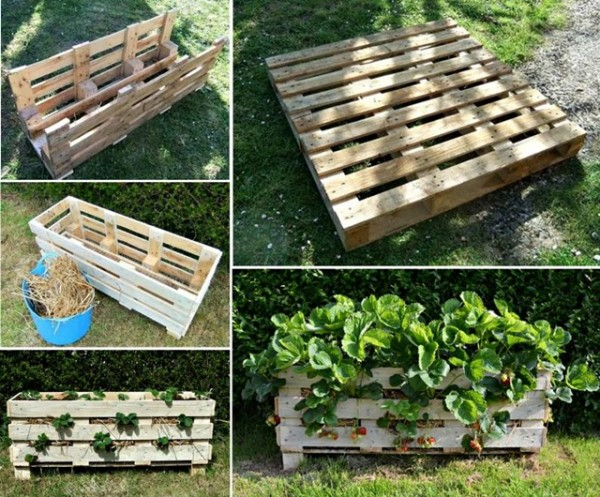 DIY Vertical Strawberry Planter from a single Pallet - video