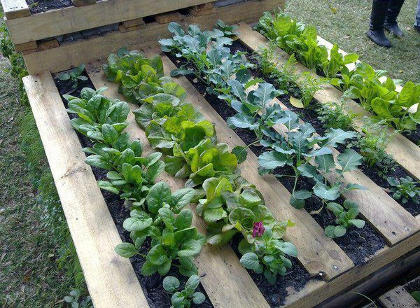DIY Recycled Pallet Garden Planting Tutorial2