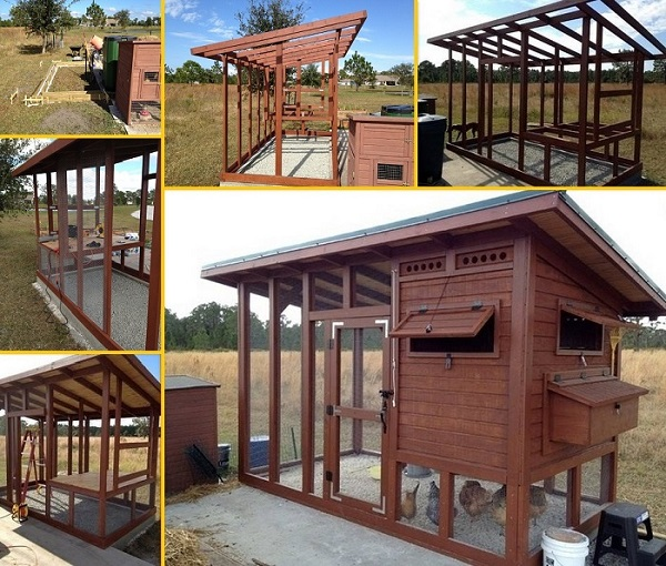DIY Backyard Chicken Coop1