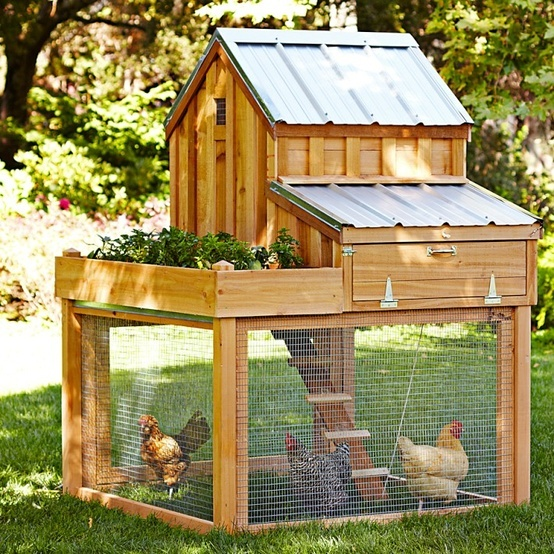 DIY Backyard Chicken Coop14