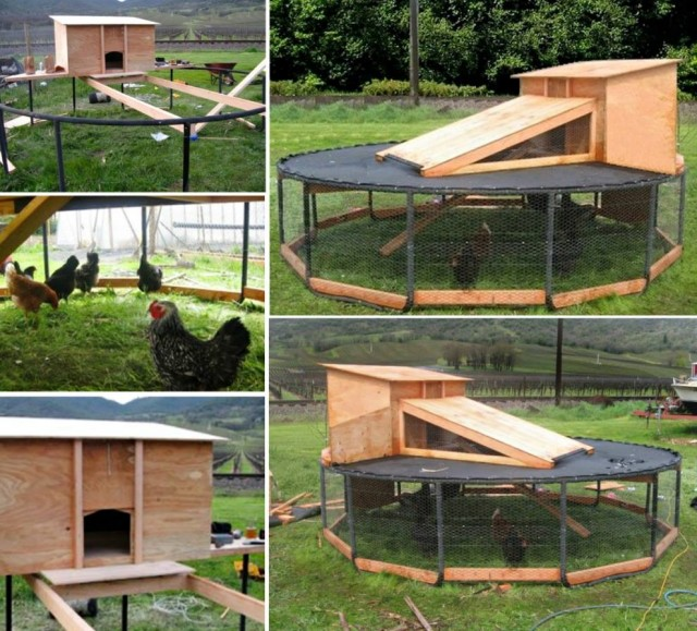 DIY Backyard Chicken Coop Tutorials