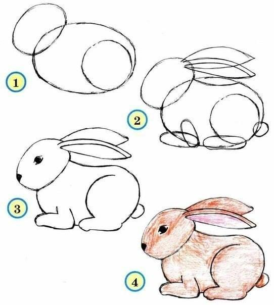 Draw wildlife animals bunny