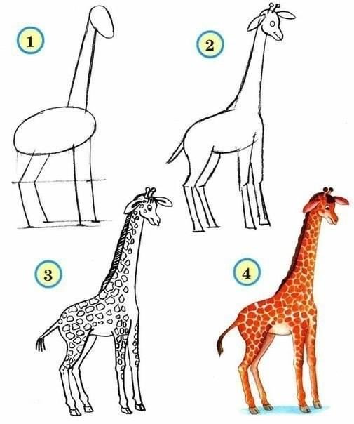 Draw wildlife animals giraffe