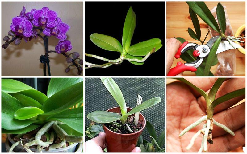 Выращивание орхидей в домашних 96