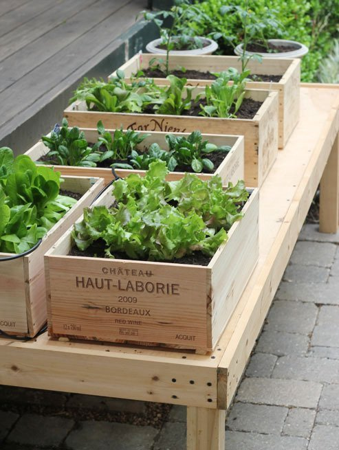 planted herbs in wine boxes
