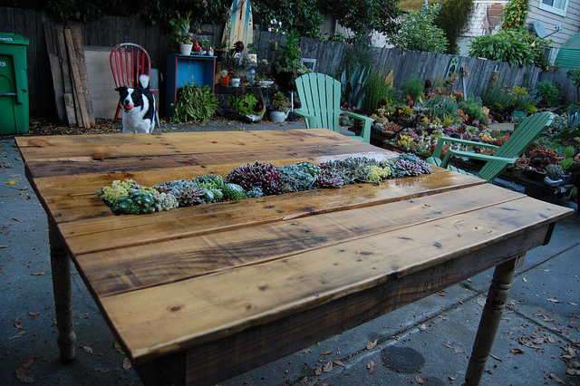 20+ Outdoor Pallet Furniture DIY ideas and tutorials- DIY Succulent Pallet Table
