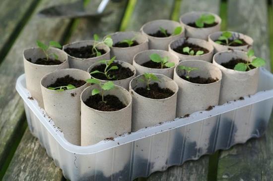 DIY Paper Roll Seed Starter 2