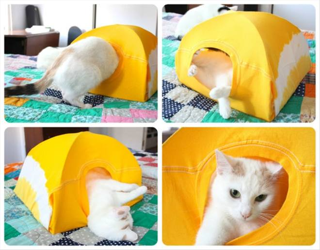 Turn Old T-Shirt into a Cat Tent Tutorial