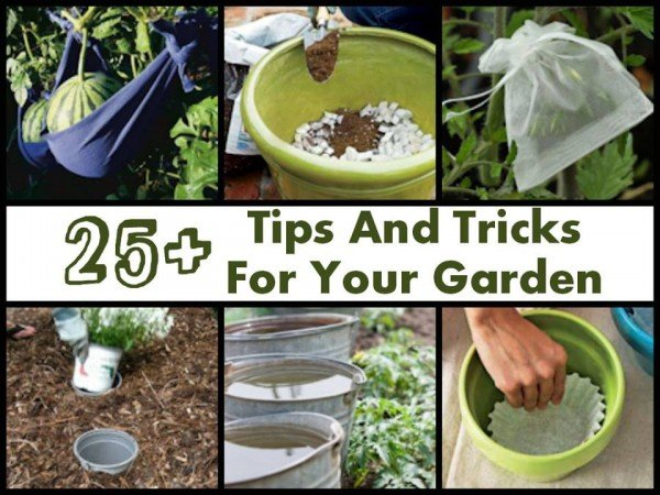25+ Clever DIY Tips And Tricks Gardeners Won't Want To Miss