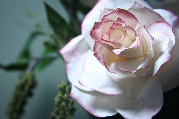 How to DIY Coffee Filter Rose tutorial