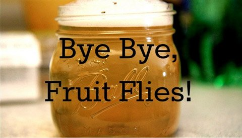 how do you catch fruit flies fruit with seeds