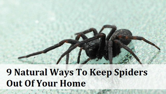 natural ways to keep spiders out of house