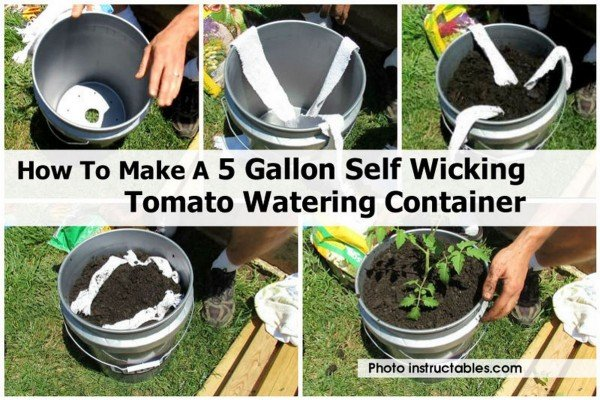 How To Make A 5 Gallon Self Wicking Tomato Watering Container - video included