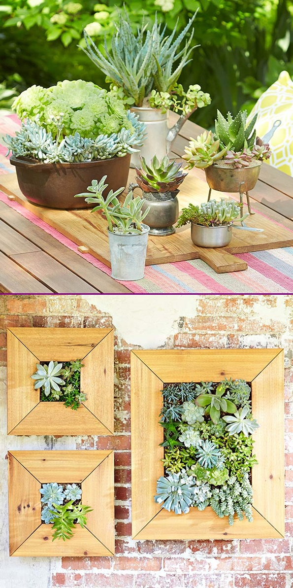 DIY Living Succulent Picture Wall Decor