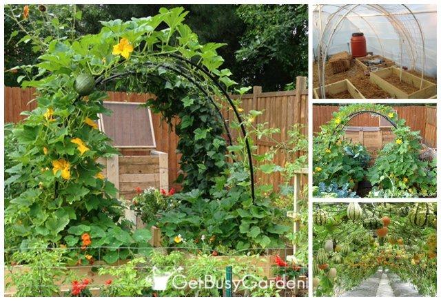 How To Build a Squash Arch DIY Tutorial