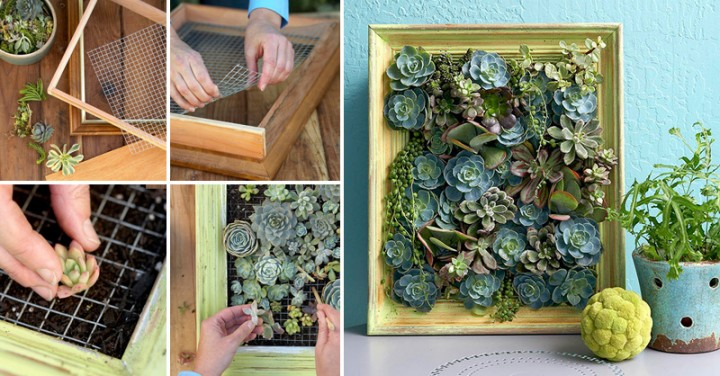 How to Make Living Succulent Picture