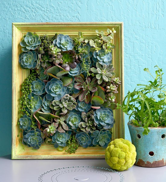 How to Make Living Succulent Picture wall