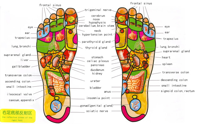 Massage Your Feet Before Sleeping to Boost Your Health - foot Reflexology is the exerting of pressure on targeted areas of the feet (or hands) using the acupressure points found on a reflexology foot chart.