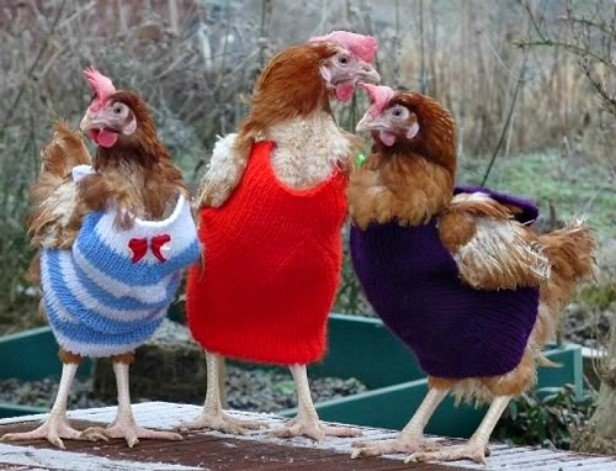 DIY Knit Chicken Jumper Sweater Free Pattern