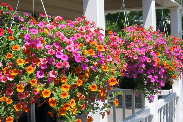 10 Hanging Basket Essentials