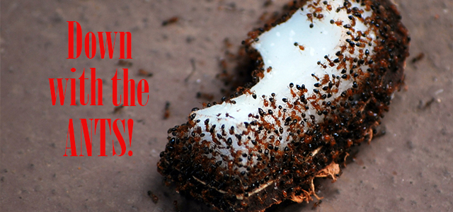 Image Result For Sugar Ant Traps