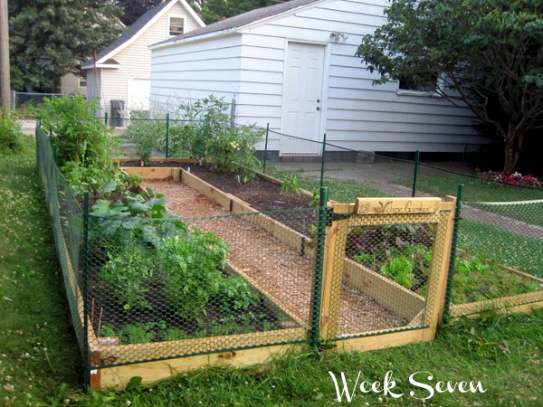 Diy Ushaped Raised Garden Bed For Easy Access