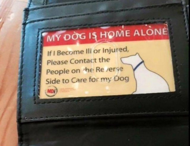 DIY Pet Care Emergency Wallet Card