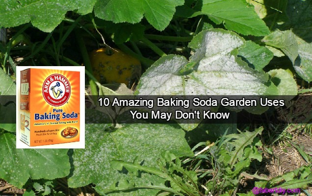 10 Amazing Baking Soda Garden Uses You May Don't Know