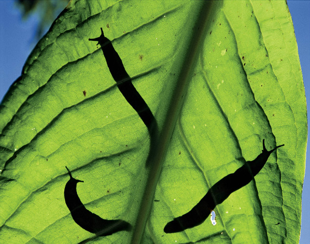 10 Amazing Baking Soda Uses in Garden- Get Rid of Slugs
