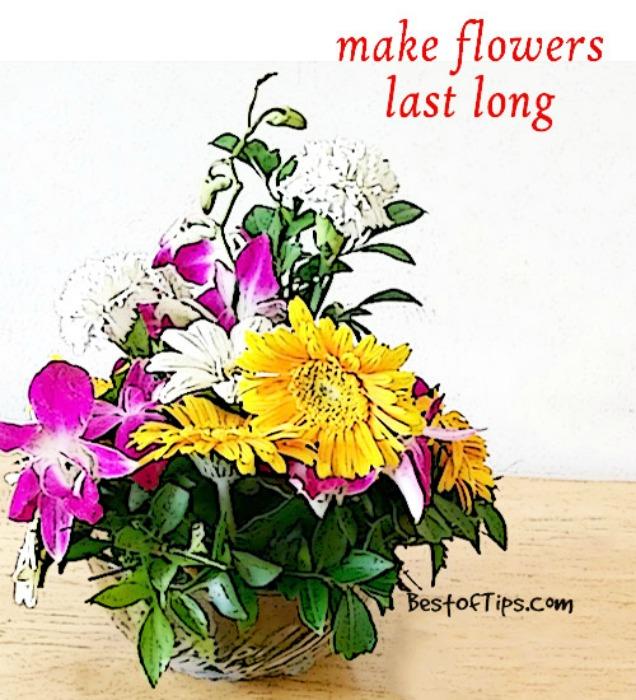 10 Amazing Baking Soda Uses in Garden-Keep Your Cut Flowers Last Longer