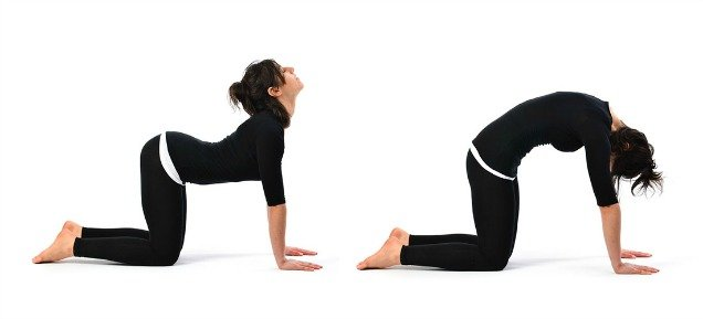 10 Easy Yoga Poses To Reduce Belly Fat-Cow Cat Stretch pose