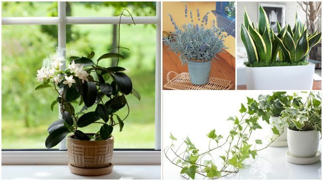 Best Plants For Bedroom To Help You Sleep Better