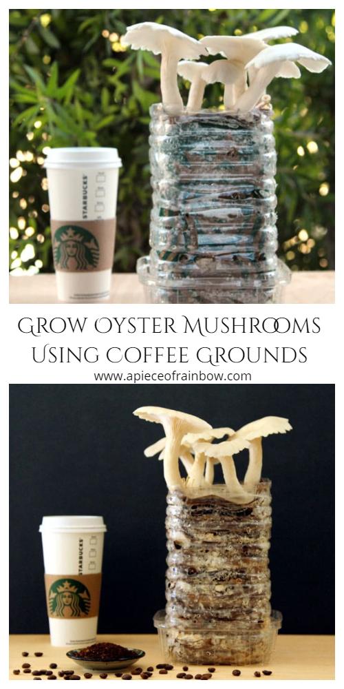 Tips to Grow Mushrooms Using Coffee Grounds Cardboard Tutorial