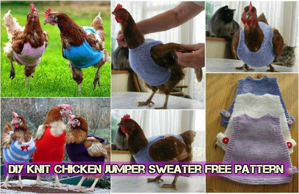 DIY Knit Chicken Jumper Sweater free pattern
