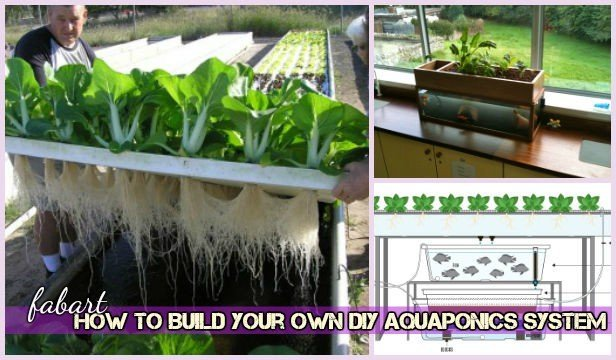 How to Build Your Own DIY Aquaponics System Tutorial-Video