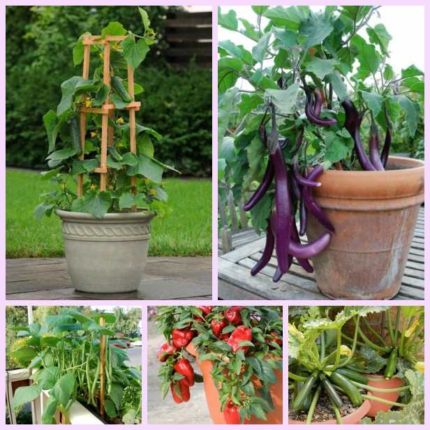 20 Best Vegetables to Grow in Pots