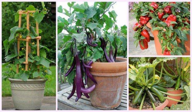 20 Best Vegetables to Grow in Pots