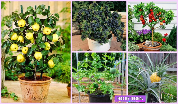 Container Gardening Grow Fruits in Pots