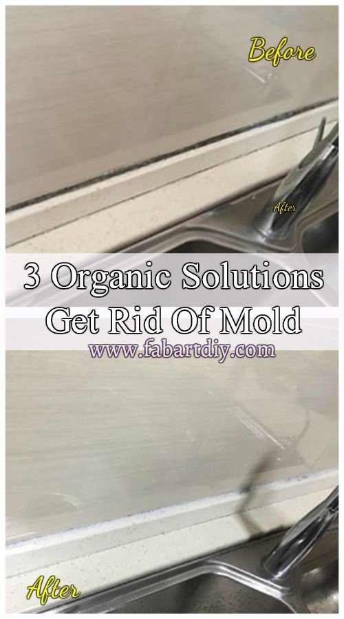 Cleaning Hack Simple Way to Get Rid Of Mold Around The House