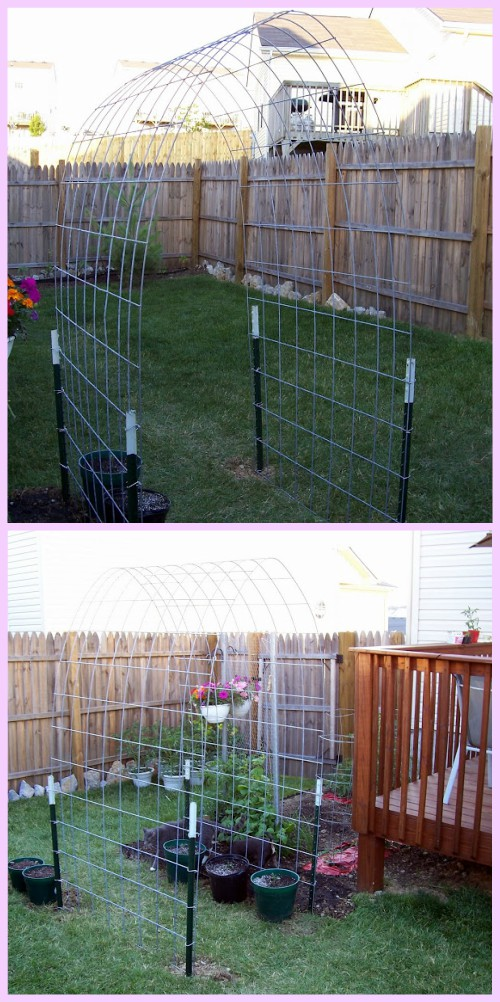 DIY Cattle Panel Squash Arch Tutorial