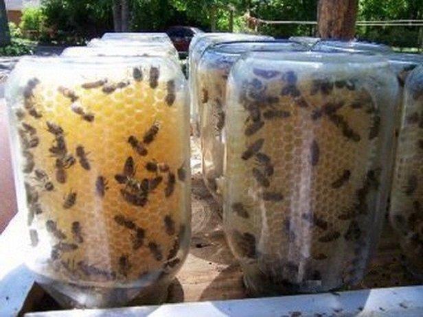 Easy DIY Beehive In A Jar Tutorial