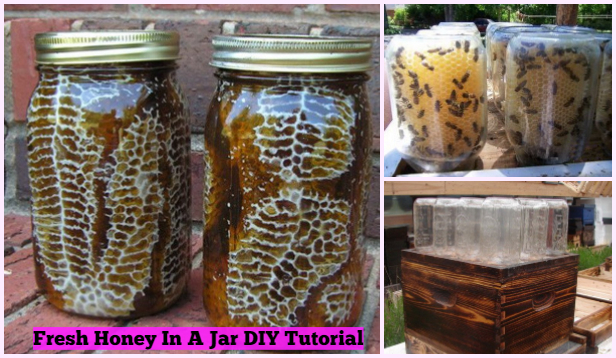 Easy DIY Beehive In A Jar Tutorial